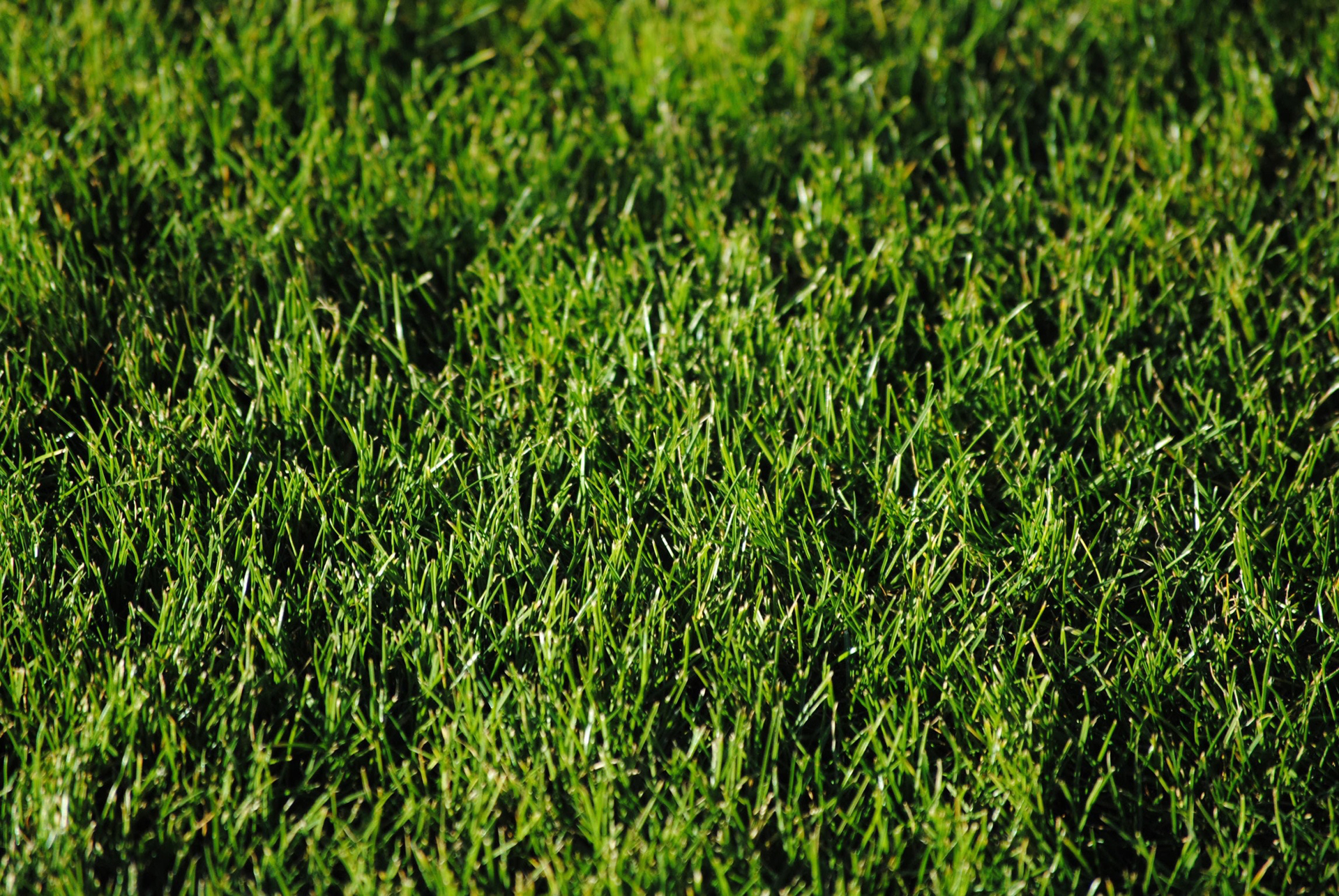 Tips For Installing A New Sod Lawn